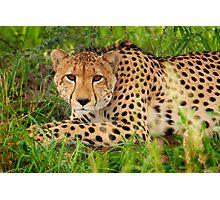 Cheetah - Okavango Delta, Botswana Photographic Print