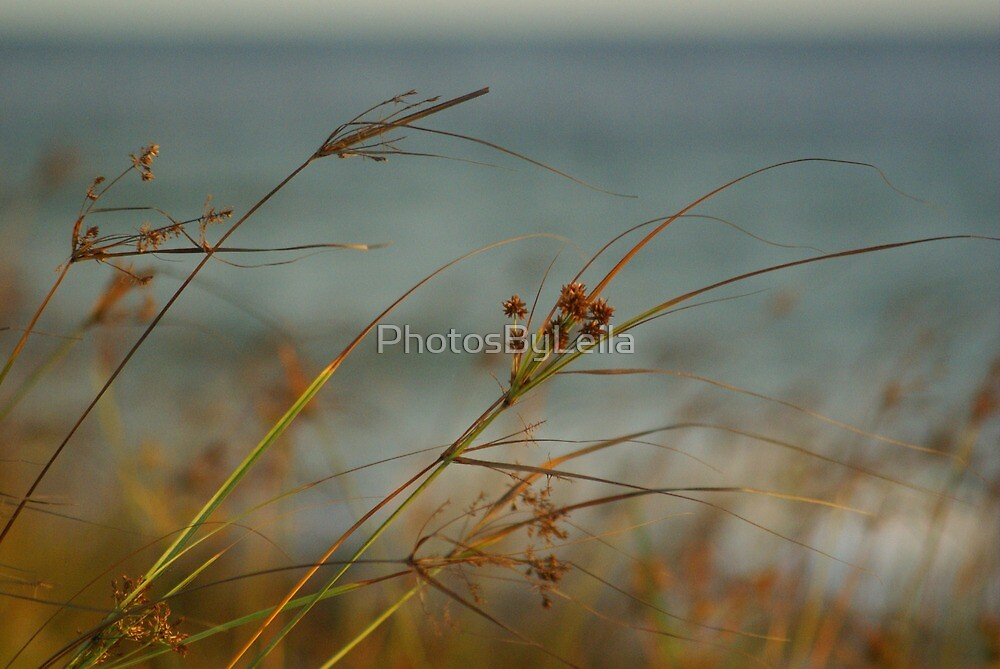 Blowing in the Breeze by PhotosByLeila
