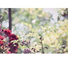 Fairy Tale Flowers Photographic Print