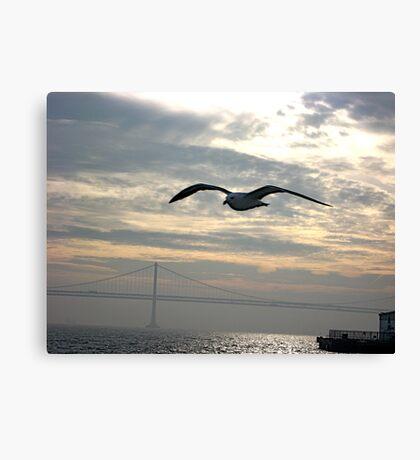 San Francisco Bay Bird Canvas Print