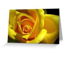 Yellow Rose: Close Up Greeting Card