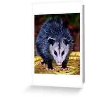 Backyard Opossum Greeting Card