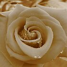 March of the Funeral Flowers - Sepia Rose by EricaMegan