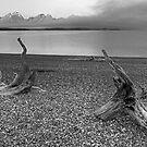 Driftwood by Gary Lengyel