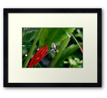 Heavenly Hummingbird on Heliconia Framed Print