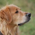 Golden Profile by FelicityB