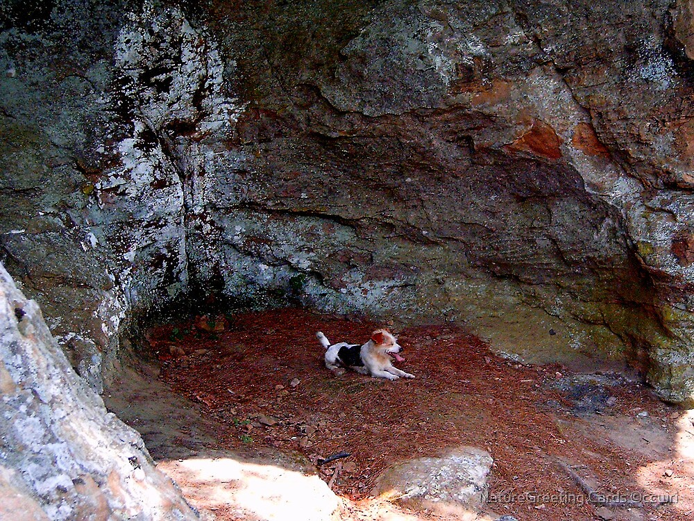 Hot Dog!! Pedestal Rock, Arkansas Ozark-St. Francis National Forest 6 23 2005 by NatureGreeting Cards ©ccwri