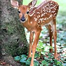 Eye To Eye With A Wide-Eyed Fawn by Gene Walls
