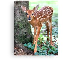 Eye To Eye With A Wide-Eyed Fawn Canvas Print