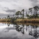 Grayton Reflections by ericthom57