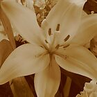 March of the Funeral Flowers Part Deux- Sepia Lily by EricaMegan