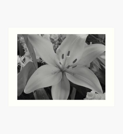 March of the Funeral Flowers Part Deux- Black & White Lily Art Print