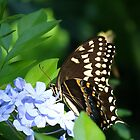 Butterfly at Disney's Animal Kingdom by bmwlego