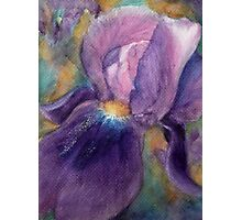 Purple Passion : Bearded Iris Photographic Print