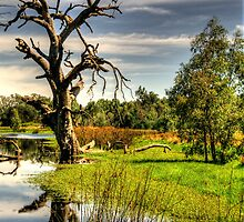 Billabong Dreaming - Wonga Wetlands, Albury NSW Australia - The HDR Experience by Philip Johnson