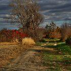 November walk 4 by tanmari