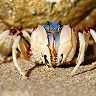 Soldier crab (FAMILY MICTYRIDAE) by Normf