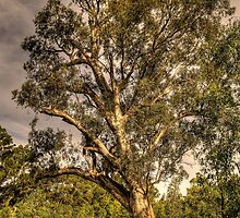 Strength - Wonga Wetlands, Albury NSW - The HDR Experience by Philip Johnson