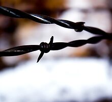 Barbed Wire by Alex Roper