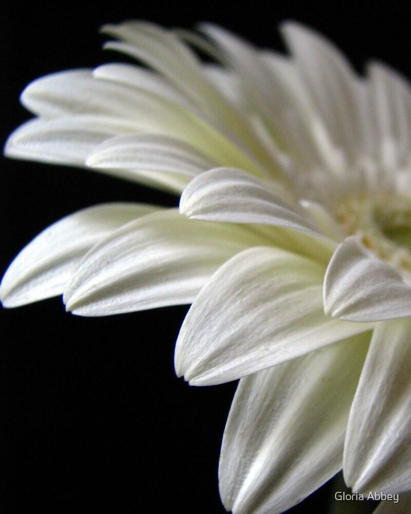 Petals by Gloria Abbey