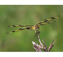 Halloween Pennant Dragonfly front and center. Photographic Print