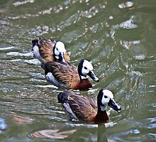 Ducks in a row by D R Moore