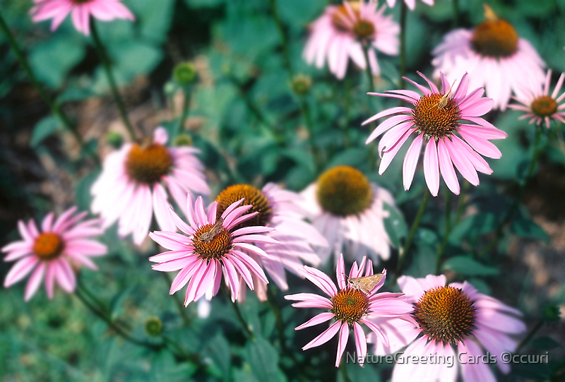 In The Flower Patch by NatureGreeting Cards ©ccwri