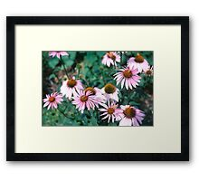 In The Flower Patch Framed Print