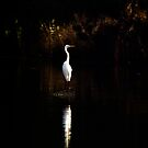 Egret, Manly Lagoon, Sydney Australia by Bill  Russo