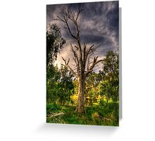 Reach For The Sky - Wonga Wetlands,Albury - The HDR Experience Greeting Card