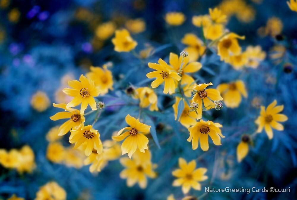 Wild Merigolds by NatureGreeting Cards ©ccwri