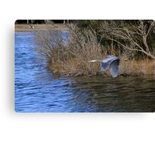 The Great Blue Heron Canvas Print