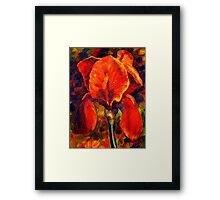 The Red Iris Framed Print
