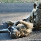 CHACMA BABOON – Papio ursinus - TOTALLY EXHAUSTED ! by Magriet Meintjes