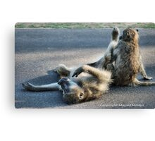 CHACMA BABOON – Papio ursinus - TOTALLY EXHAUSTED ! Canvas Print