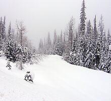 Winter Wonderland by Gregory Ewanowich