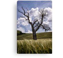Dead Tree Dancing In A Cornfield Canvas Print