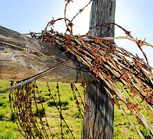 Barbed by 079archie