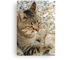 Relaxed Tabby Cat Against Stones and Pebbles Canvas Print