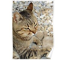 Relaxed Tabby Cat Against Stones and Pebbles Poster