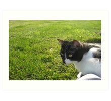 Kitty meets the Grass Art Print