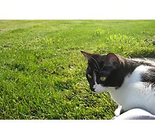 Kitty meets the Grass Photographic Print