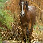 Wild Foal by Sue  Cullumber