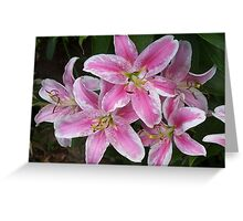 Pink Lily Greeting Card