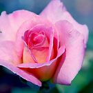 Pink Beauty Queen by Susanne Van Hulst