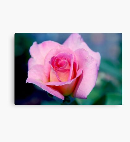 Pink Beauty Queen Canvas Print