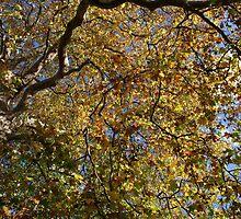 Looking up by Anina Arnott