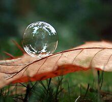 bubble on a leaf by Erin Mason