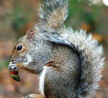 Squirrel On a Stump by Erin Mason