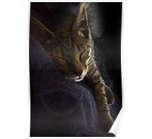 Tiger Sleeping Poster